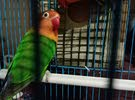 BIRD FOE EXCHANGE