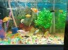 حوض اسماك كامل مع 16 سمكه +كاونتر للحوض