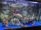 aquarium and fish for sale حوض معى السمك للبيع