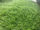 عشب صناعي للبيع (المتر ب55)