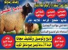 غنم للبيع  مع التوصيل مجانا جميع مناطق الكويت