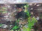 aquarium and fishes for sale