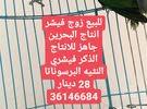 زوج لافبيرد فيشر انتاج البحرين