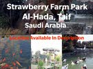 Strawberry Farm Park Taif tourist place