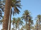 بستان على طريق بغداد حله للبيع السريع