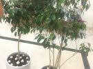 original plants for sale