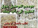 اللبان العماني الحوجري الأصلي