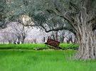 زراعه الاشجار المثمره