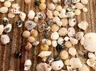 اصداف واحجار كريمة بحرية طبيعية 100%