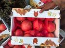 استراد افضل انواع الفاكهة و الخضار من مصر