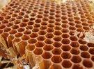 عسل اسباني مصنّع ذو جوده عاليه البيع بالجمله والدولار 1500