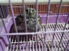 owl is for sale البومة للبيع