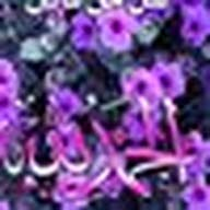 Mustamal Hosam