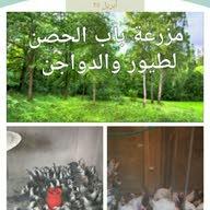 مزارع باب الحصن ابو محمد الاحمد الاحمد