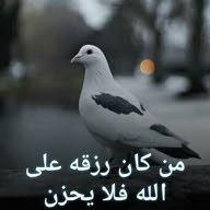 محمود خليل خليل