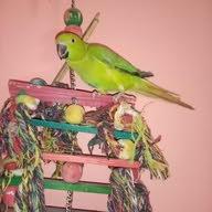 العش الذهبي محل مستلزمات الطيور