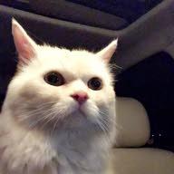 القط چاكي