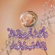 وائل عبد المولى
