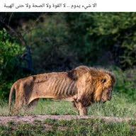 ahmad Qeshta