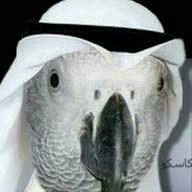عمر القيسي
