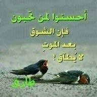 طارق طارق