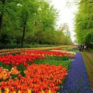 تنسيق الحدائق تنسيق الحدائق