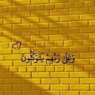 ابو يوسف
