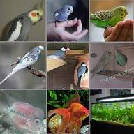 Fish birds hobby