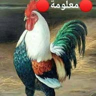 سجاد ابو علي