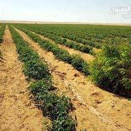 شركة النور للاستثمار الزراعي