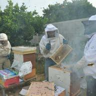مناحل عسل مملكة النحل