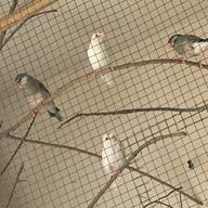 Fishbirdshobby