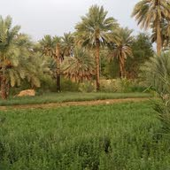 أحمد العبري