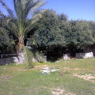 akram abu shaar