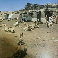 hamed alyaqoobi