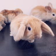 bunny kwt