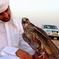 المبروك محمد المبروك