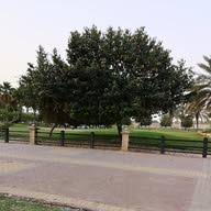 Najee Mohameed