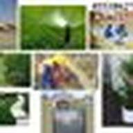 Jazeera Plants