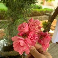 Bhaa Omani