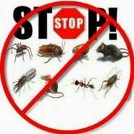 شركات الحياه لمكافحة الحشرات