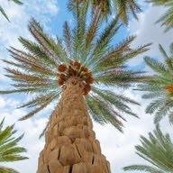 MJD Tripoli