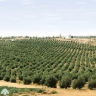 مزارع ابو محمد