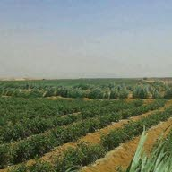 محمد للاستثمار الزراعيه الساعدي الساعدي