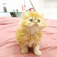 hu cats ly علي الفيس[[ Hu Cat's Ly ]]