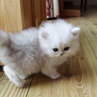 Sweet Cat Sweet Cat