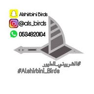 AlshirbiniBirds