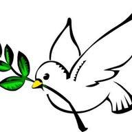 طائر السلام