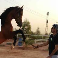 تركي بن فهد
