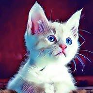 ليتربوكس القطط الصحي